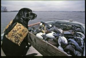 dog & decoys
