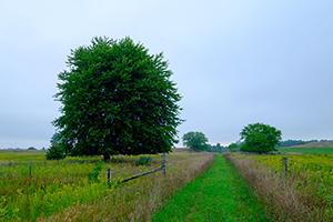 Watkins Lake path and tree
