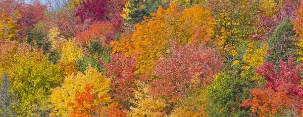 fall color in Ontonagon County, Michigan