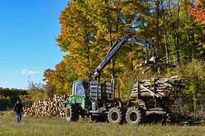 A logger empties and stacks wood in a sunny field in Mackinac County.