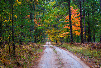 A dirt road leads into a woods at the Pigeon River Country State Forest.