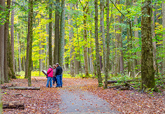 Visitors take a walk through fallen autumn leaves at Hartwick Pines State Park.