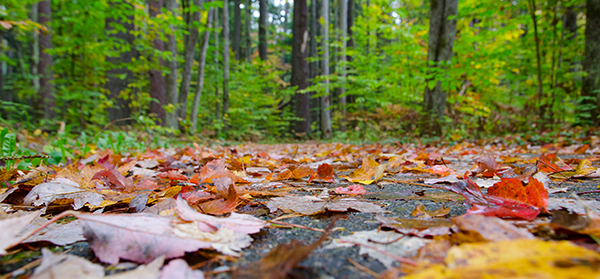 wooded trail with fall leaves on the ground
