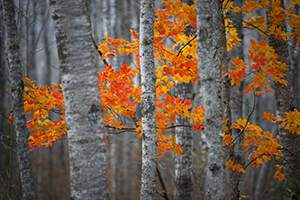 close up of trees with fall foliage