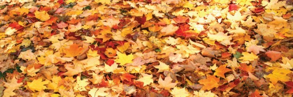 leaves header