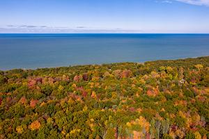 forest with fall foliage along coastline