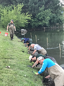 A group of people in waders  looks for red swamp crayfish in burrows in a river