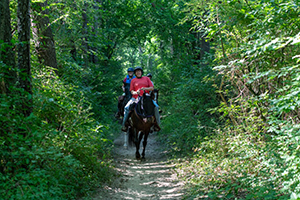 People riding horses on equestrian trail
