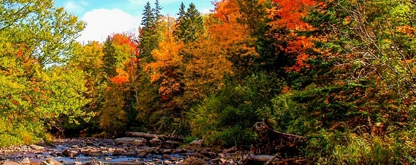 orange, red and gold trees surrounding a stream running away from the camera, blue sky with clouds