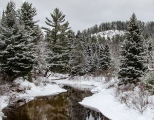 An image of a conifer forest in winter. A river is in the foreground