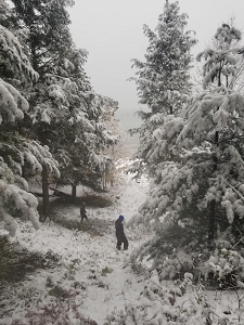 Workers survey for hemlock woolly adelgid in a snowy forest