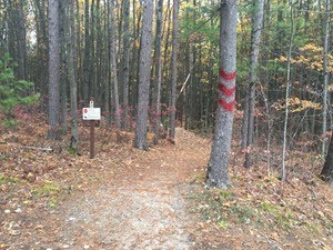 wooded trail with trail markers