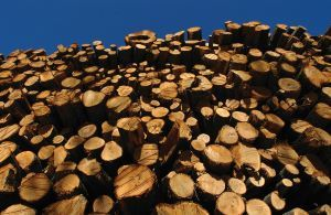 A stack of cut logs is pictured