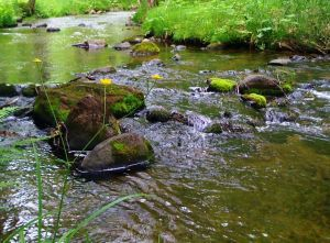 A river and yellow flowers in the verdant Pilgrim River Forest