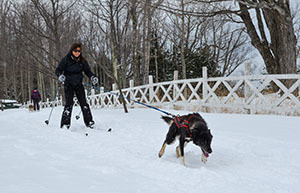 A winter BOW workshop participant is shown skijoring.