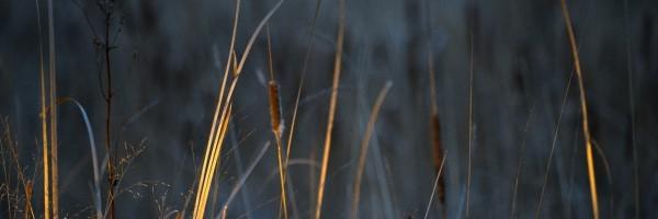 wetlands header