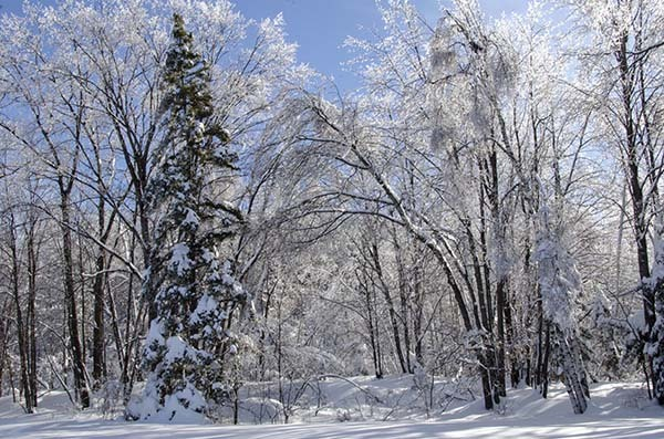 Ice-covered trees glisten in the sunlight in the aftermath of a February ice storm in Marquette County.