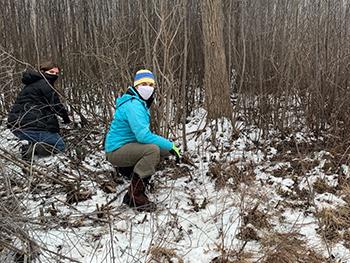 volunteers wearing face masks removing invasive plants