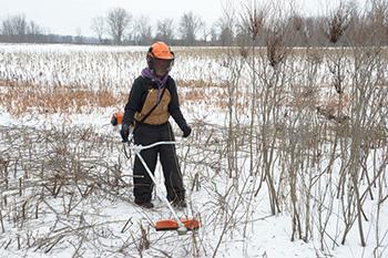 volunteer clears brush in field