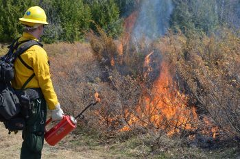 A firefighter in protective gear conducts a prescribed burn in brushy grassland