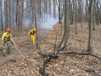 Two fire staff attend a burn line in a forest