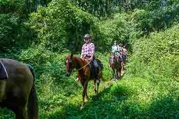 Horseback riders are pictured on a trail ride through a wooded area on a sunny day.