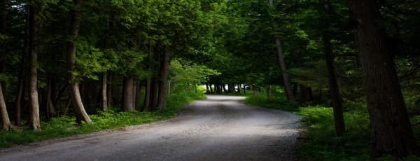 forest road header
