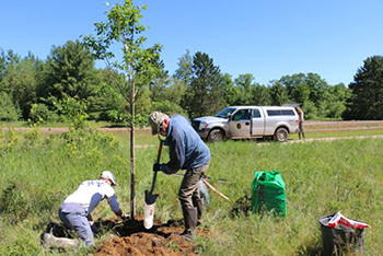 volunteers planting a tree with DNR truck in background