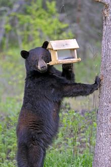 black bear and bird feeder
