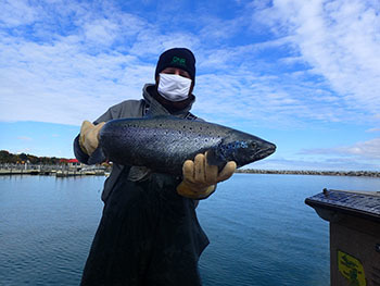 DNR employee holding an Atlantic Salmon