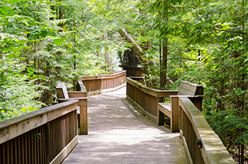 boardwalk through forest at RAM Center