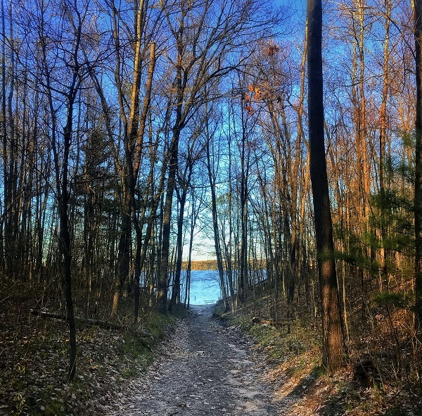view down a wooded trail, crisp blue water and sky coming through the trees in background