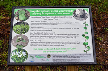 An interpretive sign shows visitors to the Forest Lake State Forest Campground in Alger County how to help stop spreading invasive garlic mustard.
