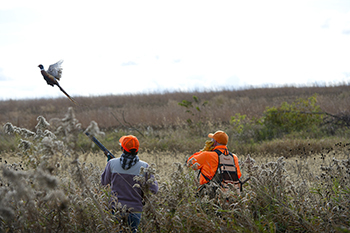 Hunters in field with pheasant flying in front of them