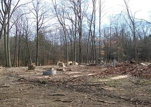 oak wilt Hoffmaster state park