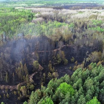 A blackened, burned area of the forest is shown in an aerial view.