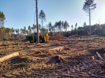 A tree cutting machine sits in the center of a clearing surrounded by piled-up logs and slash -- branches and other debris -- on the ground.