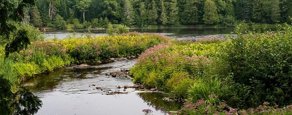 woodsy, waterfront view at Tahquamenon Falls State Park