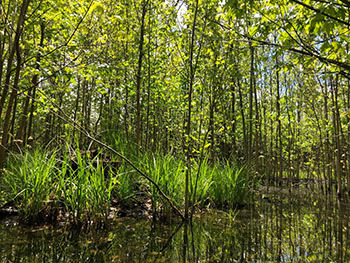 trees standing in wet-mesic forest