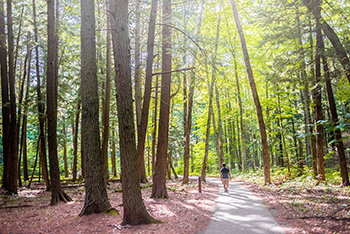 man walking on wooded trail with sunlight shining through trees