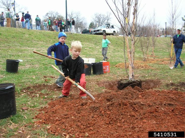 Smiling children help plant trees in a park, digging into red soil with shovels, supervised by adults