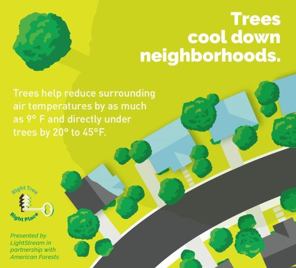 Bright green infographic showing that trees cool neighborhoods, reducing air temps by 9 degrees and as much as 20-45 degrees directly underneath