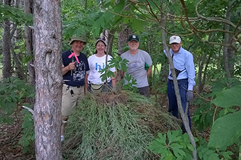 Volunteers with invasive knapweed at Grand Mere State Park