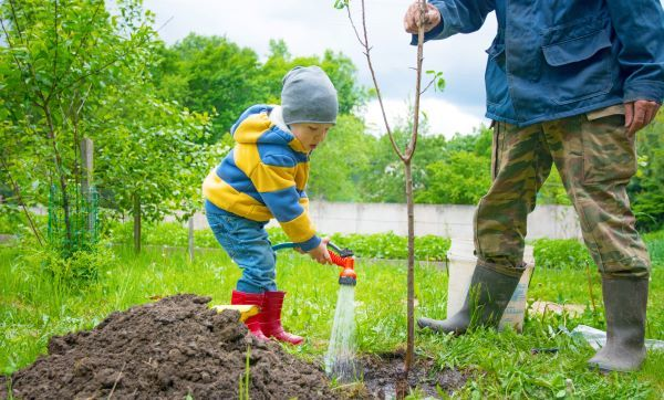 A young boy wearing a striped sweater and red rain boots waters a newly-planted tree with a hose while an adult assists.
