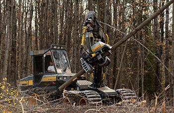 Man operating heavy equipment to harvest tree