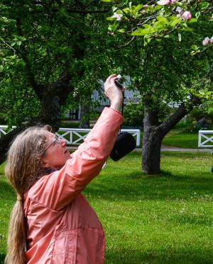 A long-haired woman in a pink top takes a photo of a tree in a park