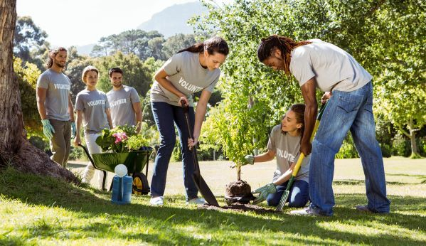 Image of a group of volunteers planting a tree in a sunny, grassy park
