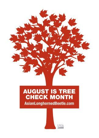 Image of red maple tree graphic with the text: August is tree check month, Asianlonghornedbeetle.com