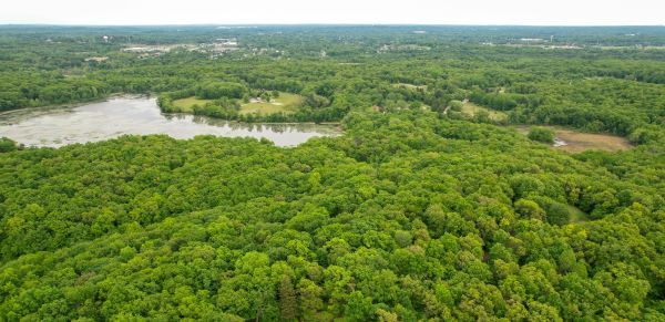 An aerial image of a dense, green forest with a lake and bright grey skies on the horizon
