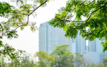 Leafy green tree branches are shown with a city skyscraper in the background